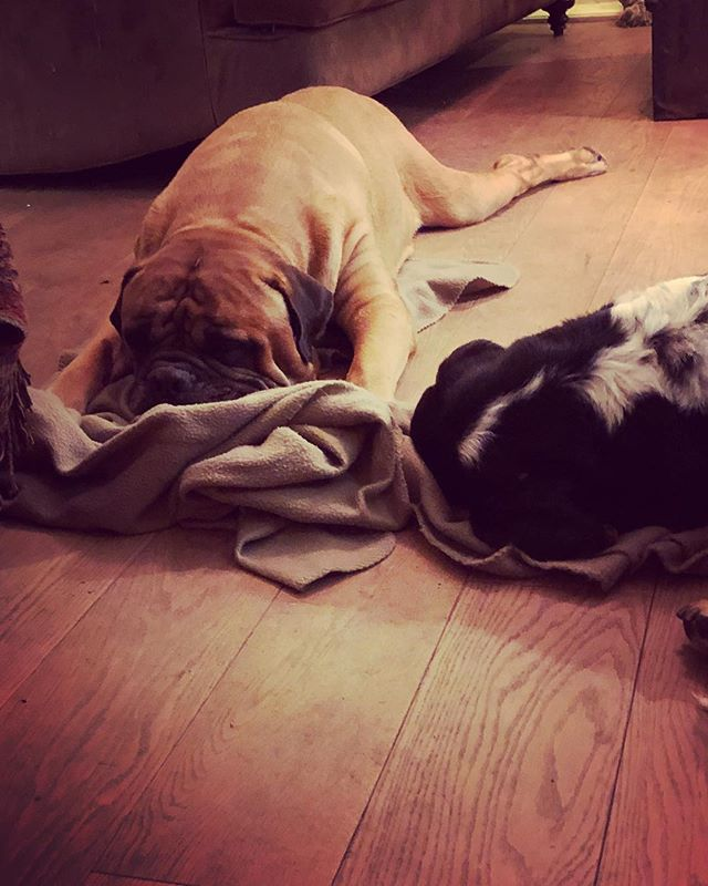 Laminate Floors Clean In A Pet